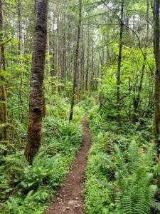 A trail in Orangegate Park